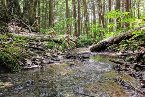 stream bed